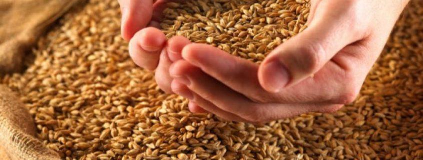 изменениям технического регламента о безопасности зерна