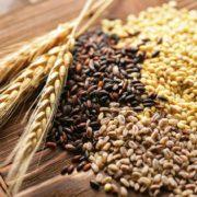 Зерновые культуры Беларусии