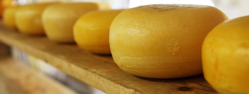 В Казани проверили сыр на ГОСТ