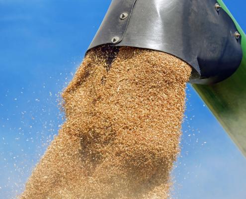 анализ зерновых
